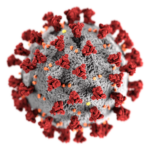 3D-Grafik des SARS-CoV-2-Virions.
